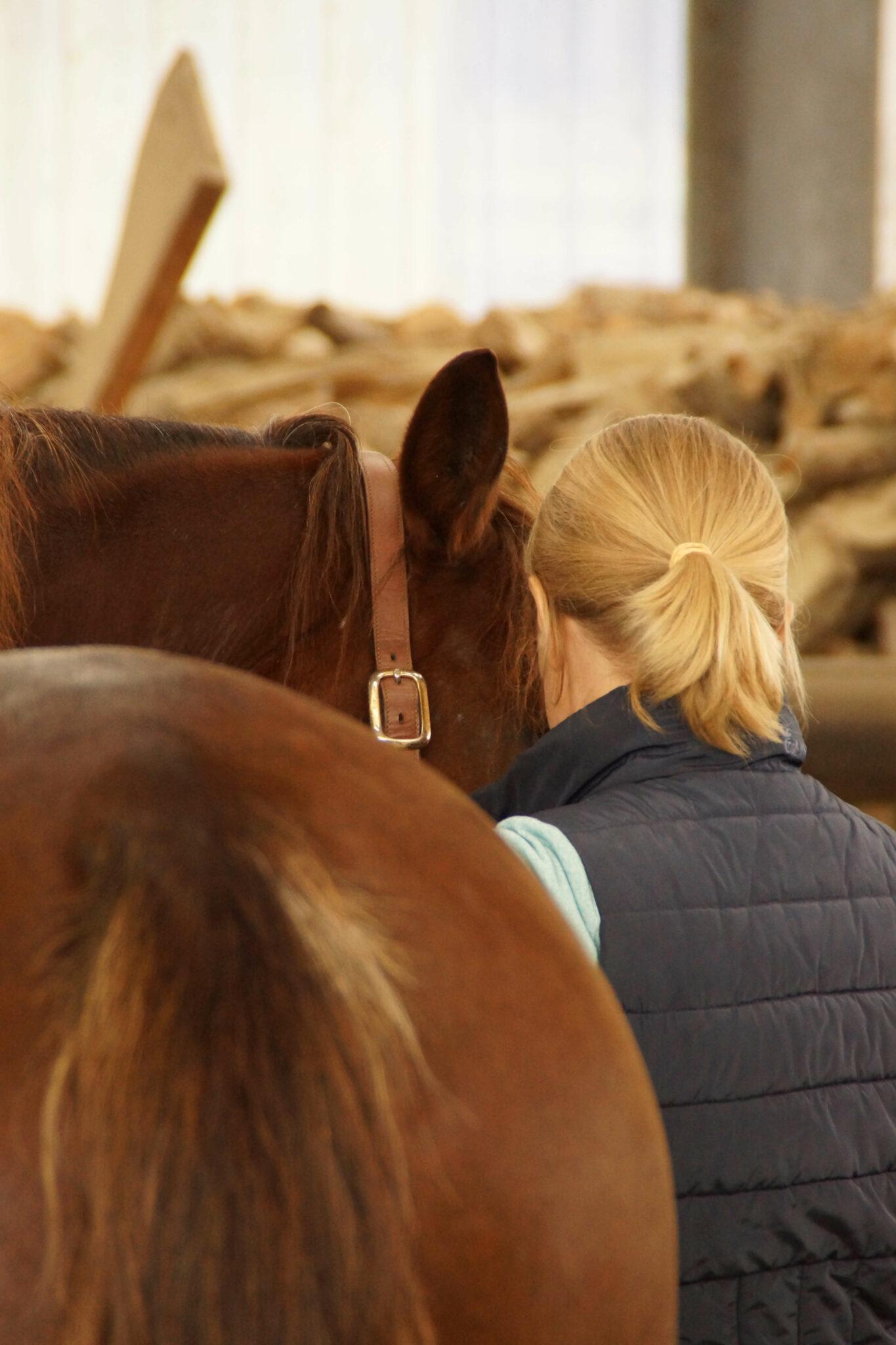Energetische Balance - Tierarztpraxis proBalance